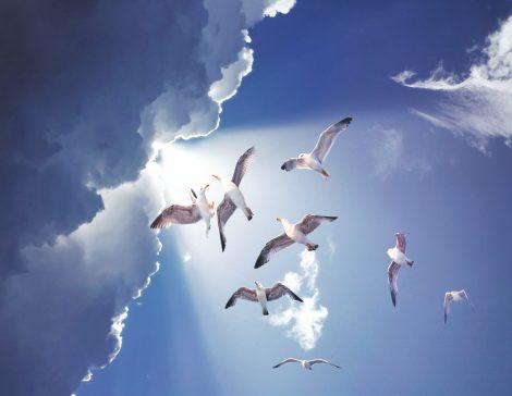 Fliegende weisse Vögel