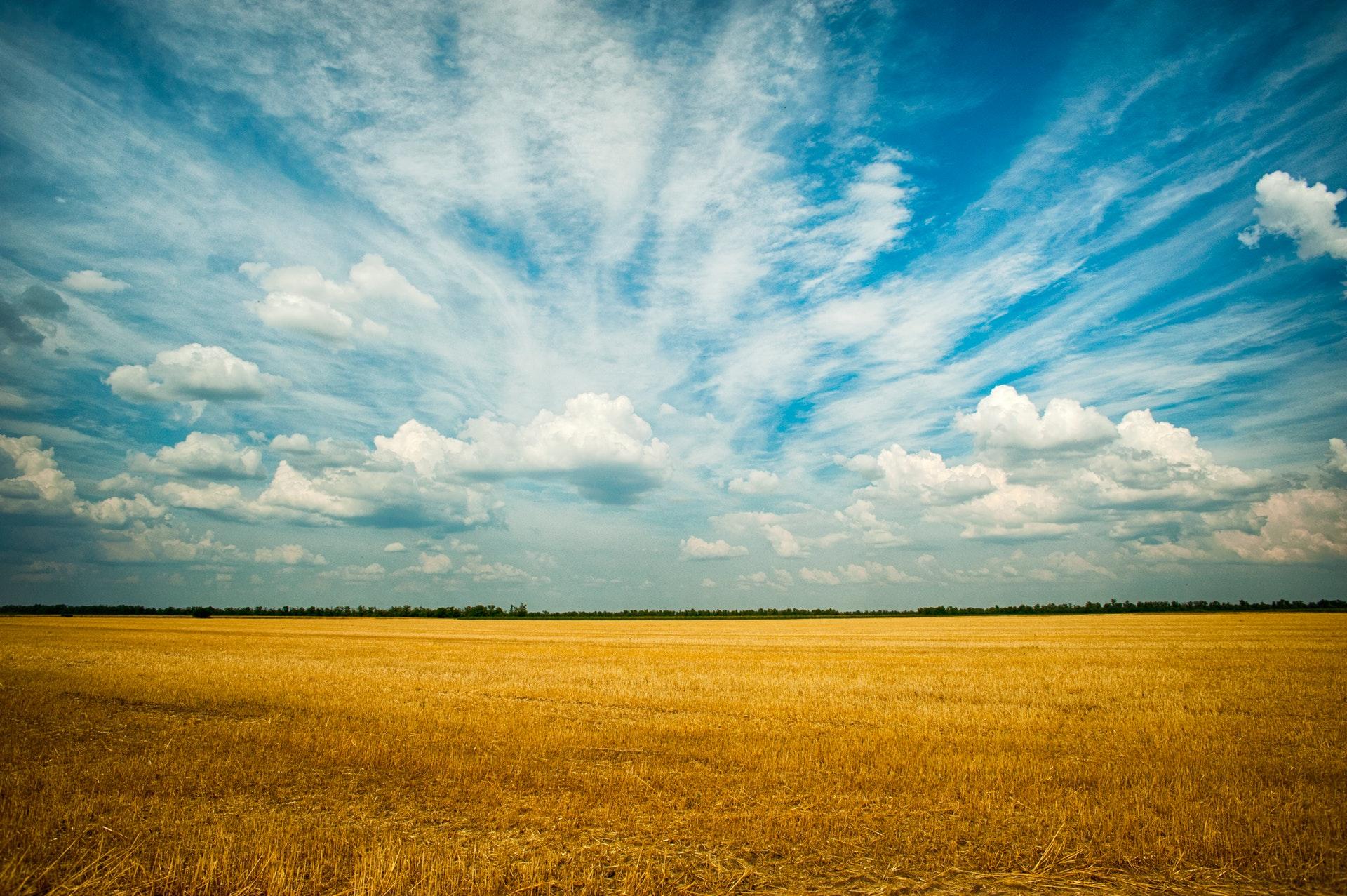 Gelbes Grasfeld mit weitem Himmelblick